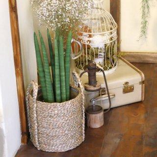 스투키 중형 라탄바구니 세트 공기정화식물