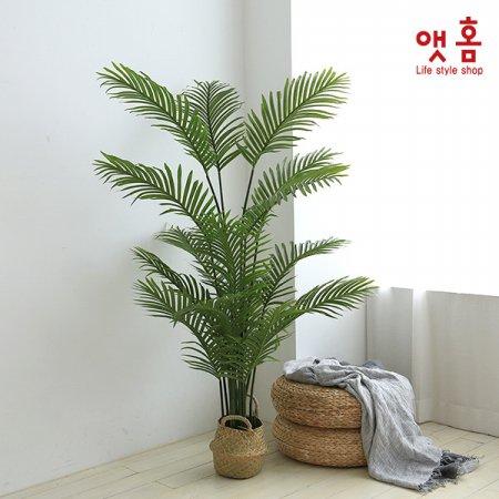 가든 아레카캄 야자나무 170cm